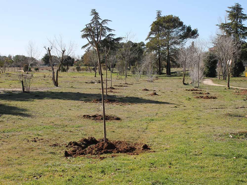 Ni un pueblo sin bosque