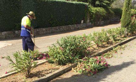 Trabajos de Jardinería en Monteacevedo