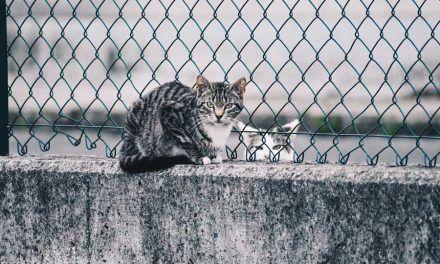 Actuaciones en las colonias felinas en Nuevo Baztán