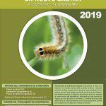 Campaña 2019 contra la procesionaria del pino